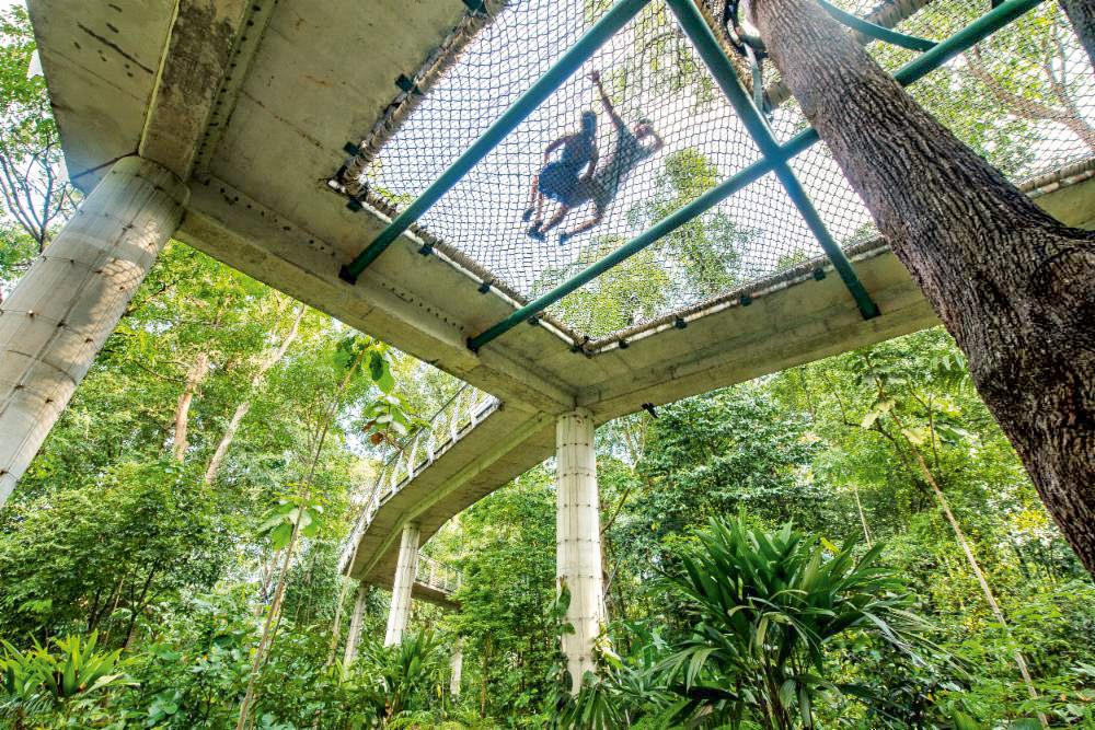 Canopy Park