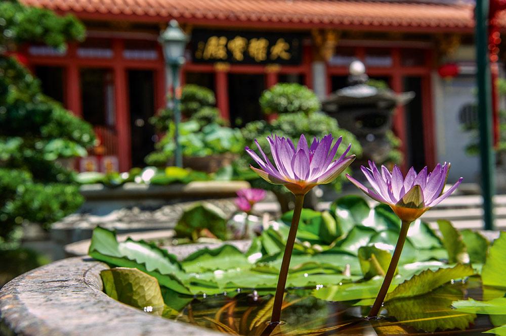 Lotusblumen im Kloster Lian Shan Shuang Lin